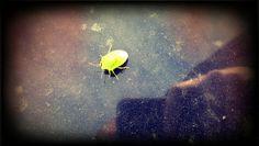the ugly bug ball.