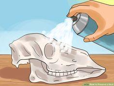 Image titled Preserve a Skull Step 9 Deer Skull Decor, Painted Deer Skulls, Cow Skull Art, Deer Hunting Decor, Horse Skull, Whitetail Hunting, Pheasant Hunting, Deer Antler Crafts, Antler Art