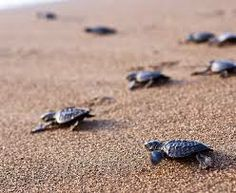 watch baby turtles hatch.