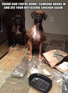 18 Completely Innocent Dogs Who Have No Idea How That Mess Happened
