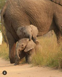 Wundervolle Tiere www.de - InneresGold - Wundervolle Tiere www.de Wundervolle Tiere www. Photo Elephant, Elephant Love, Elephant Gifts, Mother And Baby Elephant, Funny Elephant, Elephant Images, Cute Baby Animals, Animals And Pets, Funny Animals