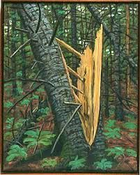 split pine tree - Google-haku