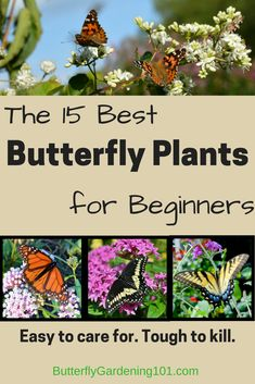You don't have to special order butterfly plants --these varieties are all widely available and incredibly easy to care for. Perfect for beginning (or busy) gardeners who want to try and attract butterflies (and hummingbirds!) to their yard. Butterfly Garden Plants, Planting Flowers, Butterfly Feeder, Flowers Perennials, Flowers Garden, Garden Yard Ideas, Lawn And Garden, Big Garden, Garden Fun