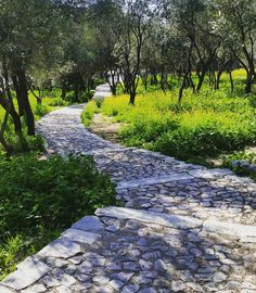 """38 Likes, 4 Comments - Gerhard Redelinghuys (@gerhard_huys) on Instagram: """"Green has become my favorite colour #green #colour #athens #acropolis #garden #path #walking…"""""""
