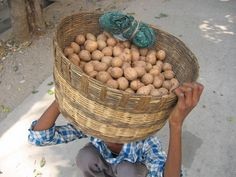 The Health Benefits Of Chikoo (Chickoo) Or Sapodilla Fruit