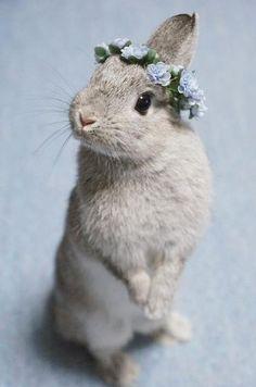 Oh, it looks just like my little sister. Sweetest little baby! #rabbit#