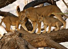 Gallery: Wildlife in Africa - Australian Geographic