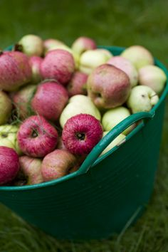 Pyo organic apples at the farm, september -November 2016 Wekdays and saturdays 10-16.00  www.fuglebjerggaard.dk