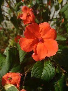 26-06-2016 cores perfeitas e complementares. Na natureza tem! E como tem...