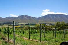 Views of the Babylonia mountain range from the vineyard Mountain Range, Wineries, South Africa, Vineyard, Cape, Coastal, Ocean, Mountains, History