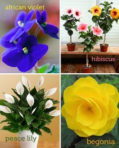 Easy indoor plants for urban gardening ideas