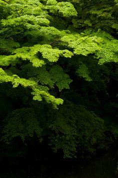 ontheroad:    Green in the rain   Katsura Rikyu Imperial Villa
