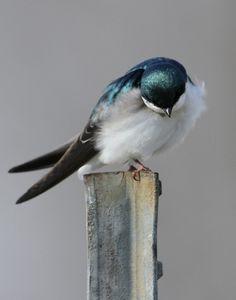 Sweet little thang. ~ETS #birdie (Elegante' | ZsaZsa Bellagio - Like No Other)