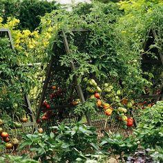 nefaeria: Some Inspiring Garden Projects: Trellises