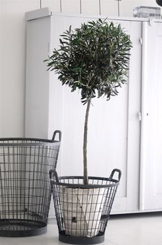Mand metaal met olijfboom #leenbakker. Leuk en minder zwaar alternatief voor zware bloembakken