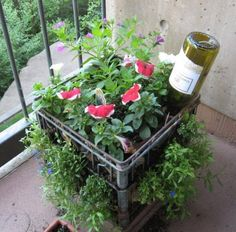 Plant container made from a plastic tray and watered with a wine bottle