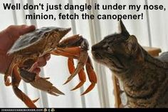 Well don't just dangle it under my nose, minion, fetch the canopener!