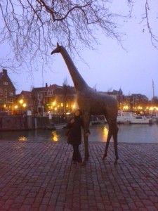 Giraffe, Dordrecht, Netherlands