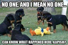 Puppy omerta
