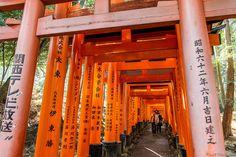 Con sus miles de torii rojos, el santuario Fushimi Inari nos sigue enamorando una y otra vez.  Recomiendan  intentar llegar hasta el final, porque hablamos de unos 4 kilómetros de caminos cubiertos de toriis y, como es de esperar, a medida que vamos caminando y subiendo por la colina, va habiendo menos gente,