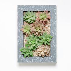 Doniczka naścienna ze sztucznymi sukulentami Wall, 30x18 cm | Bonami