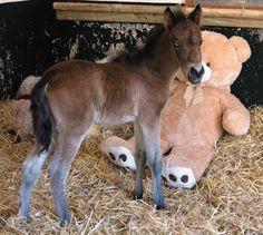 Quando tre anni fa il pony Breeze è stato salvato e trasferito al «Mare and Foal Sanctuary», una struttura nel North Devon, in Inghilterra, che si occupa del salvataggio degli equini, era disorientato