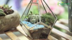 geometric  terrariums Terrarium Containers, Terrarium Ideas, Planter Ideas, Glass Terrarium, Terrariums, Planters, Small Potted Plants, Air Plants, Floating Frame