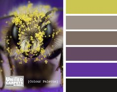 bees and pollen colour inspiration.