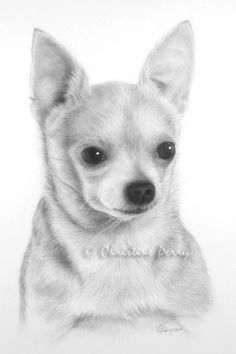"""CP-012-05, Christine Perry"", Chihuahua Drawing"