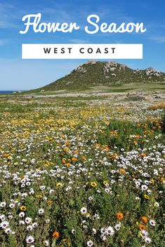 Glorious wild flowers at Postberg, West Coast National Park Cape Town Tourism, Sa Tourism, Spring Flowers, Wild Flowers, Tatty Teddy, Africa Travel, Countries Of The World, Where To Go, West Coast