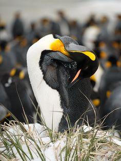 I ♥ penguins