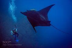 LIFE UNDER THE WAVES, Black Manta by carlosgrillo Black Manta and diver...