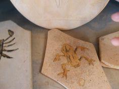 Pedra Sobre Pedra : Imitação dos fósseis da Chapada do Araripe