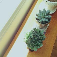 ++ planties getting some sun.