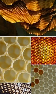 honeybee comb & cells