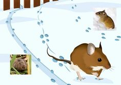 Science And Nature, Winter, Teaching, Education, Projects, Project Ideas, Baby, Animales, Winter Time