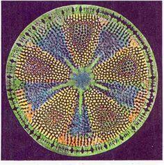 "Phyllum Chrysophyta: ""algas doradas"" (diatomeas), Del griego chrysós, dorado, y phytós, planta."