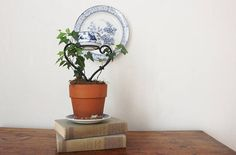 Small Heart Shaped Ivy Topiary with Blue and White Ceramic