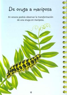 Usborne Mira dentro: 50 cosas científicas que hacer Science Experiments Kids, Ideas Para, Plant Leaves, Plants, Toddler Activities, Science Labs, Addition And Subtraction, Spanish Language, Hipster Stuff