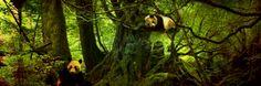 Dit is een boom met pandas