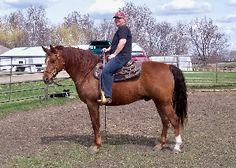 This is Pacman, a fun and lively gelding sold to a wonderful new friend. (S)