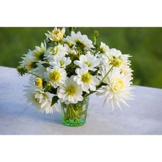Buy White Garden Dahlia Collection from Sarah Raven: The collection contains Dahlia Furka and Blanc y Verde. It is perfect for white or pastel gardens. White Gardens, Cut Flowers, Garden Inspiration, Dahlias, Pastel, Raven, Plants, Bulbs, Collection