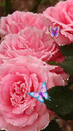 Шикарные цветы и разноцветные бабочки.