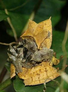 Baby frogs piggy back. lol