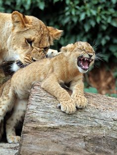 that tickles, Mom!