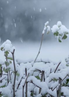a heavy, wet snowfall clings to everything...looks beautiful but can be dangerous.