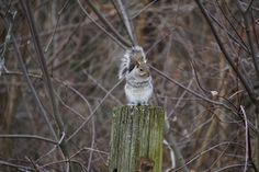 Squirrel New Jersey [6000 x 4000] (OC) - http://ift.tt/2iFJgeC