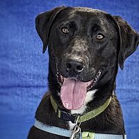 Available Pets At Oregon Humane Society In Portland Oregon