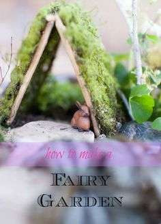 Make a miniature garden and attract a gnome or fairy!