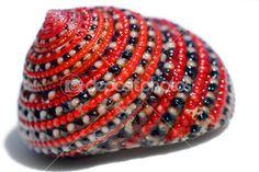 Concha de mar rojo-negro-blanco